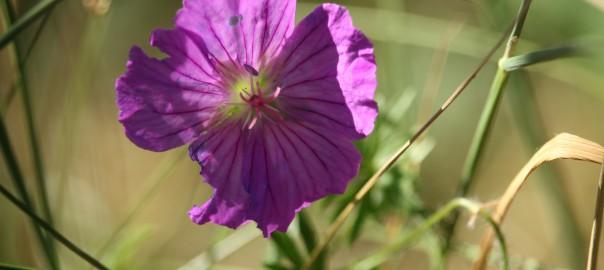 2015-06-12 Floristentreffen 018